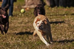 Dog Paws Playground Tennis Ball ©Kathleen Finnerty