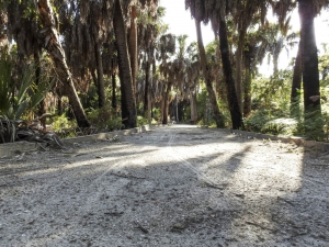 ©Kathleen Finnerty Barrier Free Trail Fort De Soto