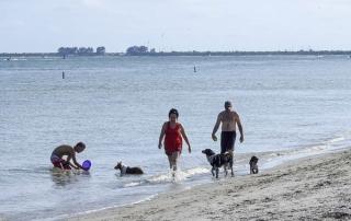fort de soto dog beach 3219