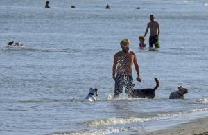 fort de soto dog beach 3244