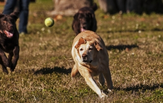 fort de soto dog chasing tennis ball playground 3172