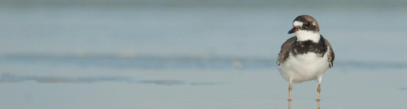 Go Birding at Fort De Soto ©Mia McPherson