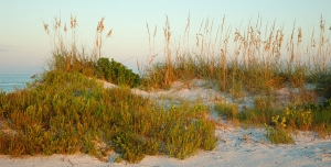 Dunes and Sea Oats ©Mia McPherson